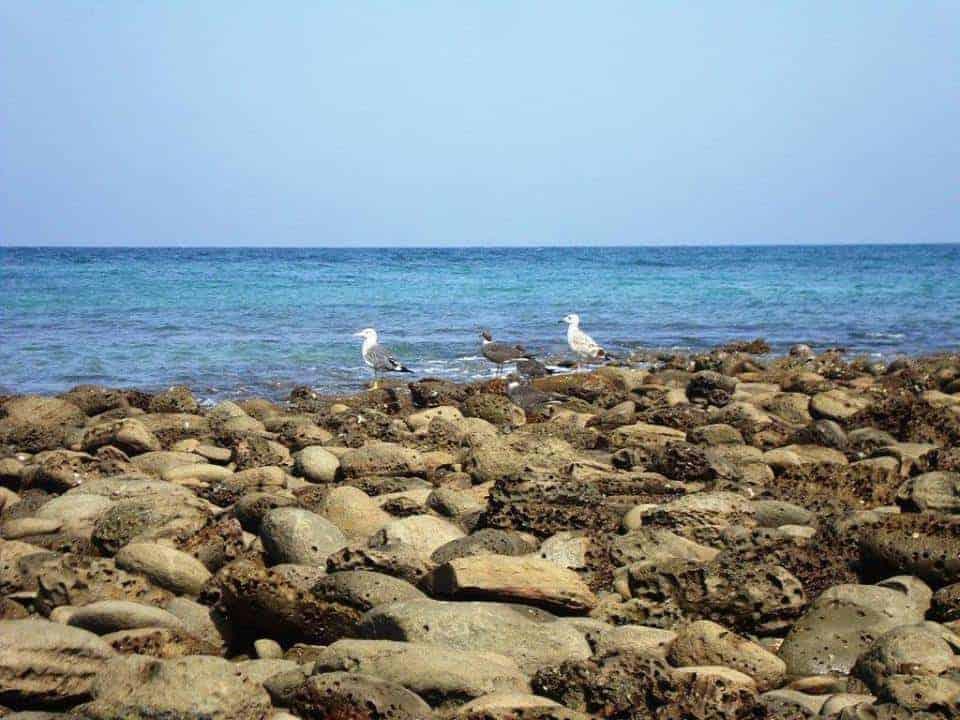 astola-seagulls